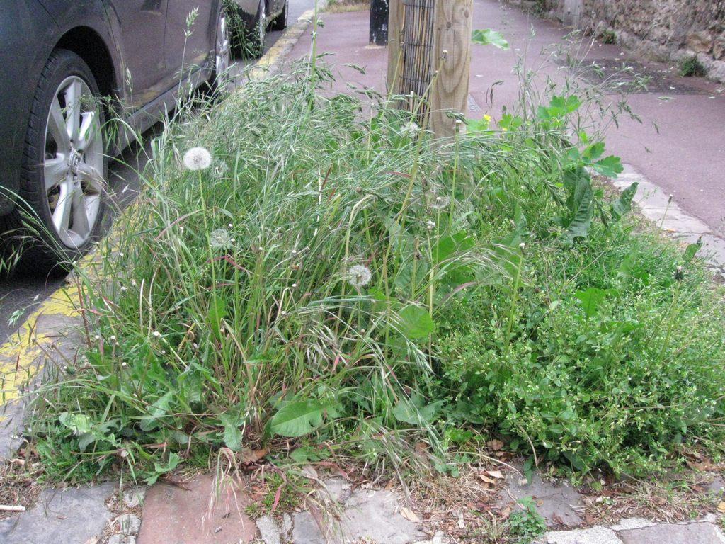 le traitement des mauvaises herbes des espaces verts publics quelle politique pour la ville. Black Bedroom Furniture Sets. Home Design Ideas